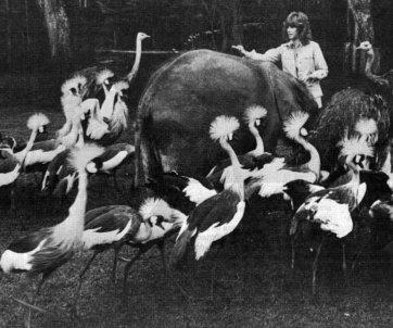 big-birds-3.jpg
